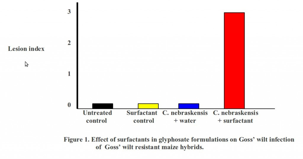 Effect of surfactants in glyphosate formulations on Goss wilt infection